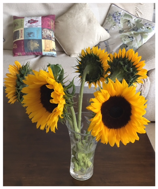 2017-11-05 Sunflowers